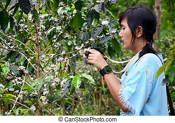 Traveler thai woman travel visit and shooting photo Unripe coffee beans on coffee tree