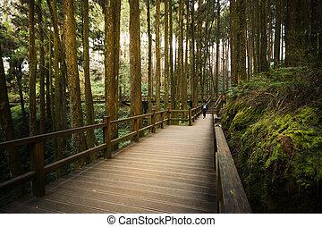 Traveler walking on Alishan National Scenic Area Walkboard path