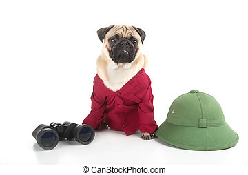 Traveling dog. Funny dog in red clothing sitting near the green hat and binoculars while isolated on white