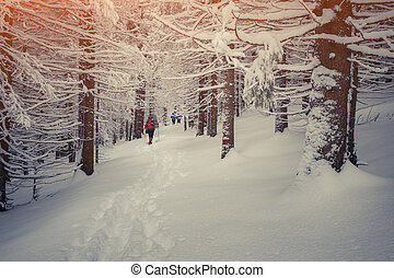 Traveling in the winter mountain forest