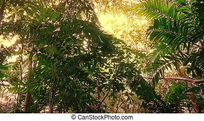 Traveling Through Tropical Rainforest In Sunny Glow - Moving...