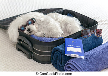 Traveling with dog pet passport