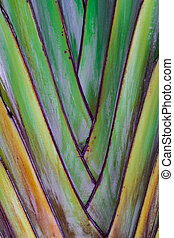 traveller's tree texture