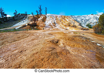 Travertine terrace, Mammoth Hot Springs, Yellowsto