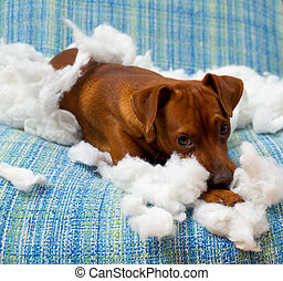 travesso, após, cão, brincalhão, morder, filhote cachorro, travesseiro