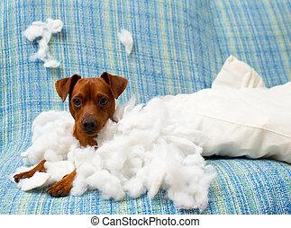 travesso, brincalhão, filhote cachorro, cão, após, morder,...
