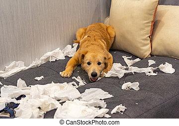 travesura, juego, papeles, blanco, dorado, sofá, perro, tejido