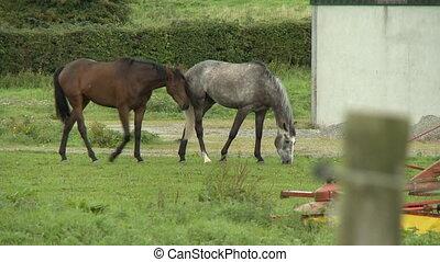 trawa, jedzenie, koń
