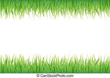 trawa, na białym, tło