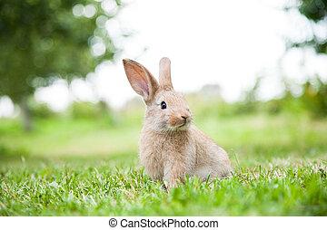 trawa, trusia królik