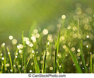 trawa, z, deszcz krople