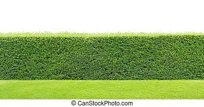 trawa, zielony, żywopłot