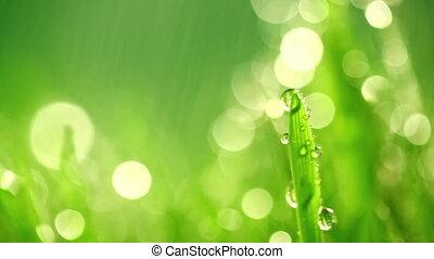 trawa, zielony, deszcz, pod