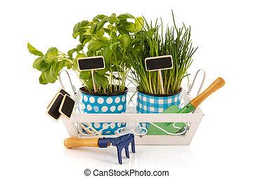 Tray kitchen herbs