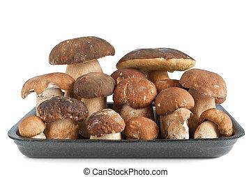 tray with Boletus mushrooms