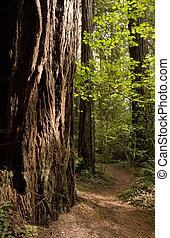 trayectoria, bosque