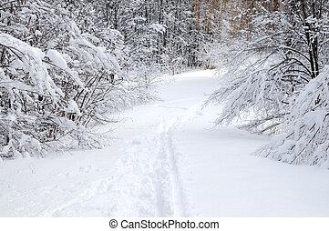 trayectoria, bosque, invierno