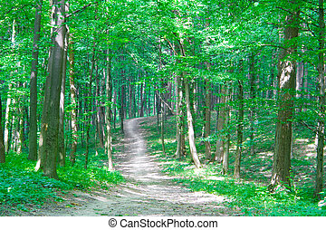 trayectoria, en, bosque