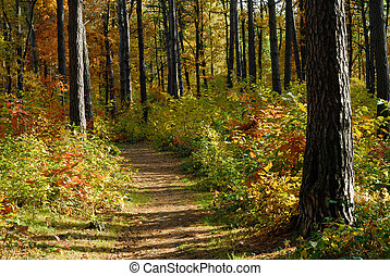 trayectoria, en, bosque de otoño