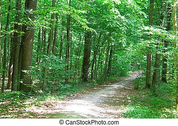 trayectoria, en, bosque verde