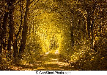 trayectoria, en, dorado, bosque