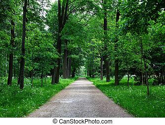 trayectoria, en, el, bosque
