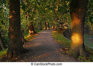 trayectoria, en, el, bosque, entre, árboles