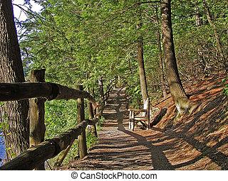trayectoria, en, el, woods.