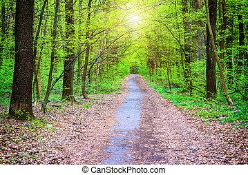 trayectoria, en, hermoso, parque verde