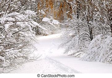 trayectoria, en, invierno, bosque