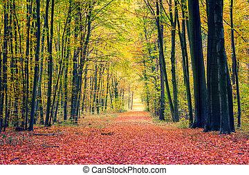 trayectoria, en, otoño, parque