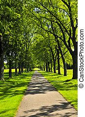 trayectoria, en, parque verde