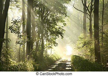 trayectoria, en, primavera, bosque, en, amanecer