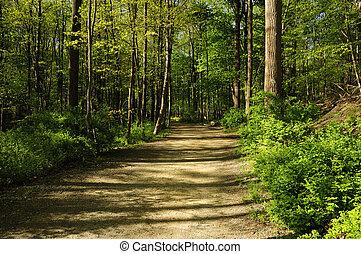 trayectoria, por, bosque, excursionismo