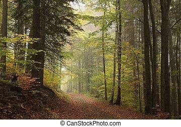 trayectoria, por, el, otoñal, bosque