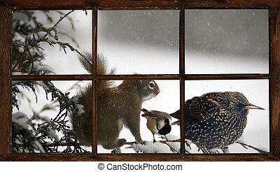 tre animali, su, uno, branch.