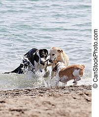 tre, cani, gioco, su, spiaggia