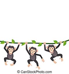 tre, chimpanse