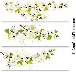 tre, fjäder, baner, med, blomstrande, träd, brunch, med, fjäder, flowers., vektor, illustration