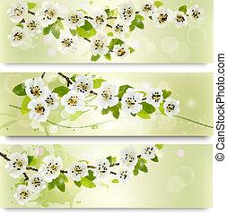 tre, fjäder, baner, med, blomstrande, träd, brunch, med, fjäder, flowers., vektor, illustration.
