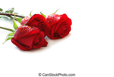 tre, rose rosse, con, gocce acqua, isolato, bianco