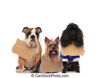 tre, senzatetto, cani, il portare, segni, a, loro, colli
