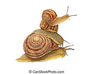 tre, snails.