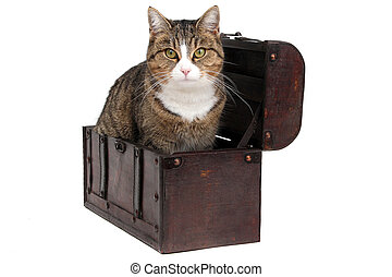 treasure chest with snoopy cat