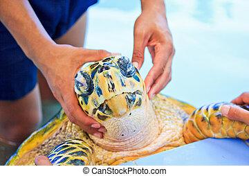 Treatment of sea turtles Sea turtle conservation