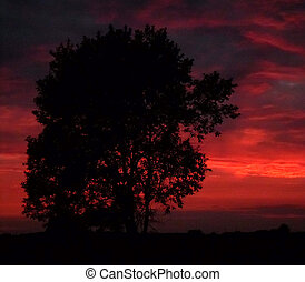 Tree after dusk. - Tree after dusk - image with artistic...