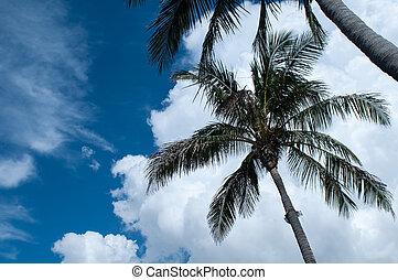 Tree against a blue sky.