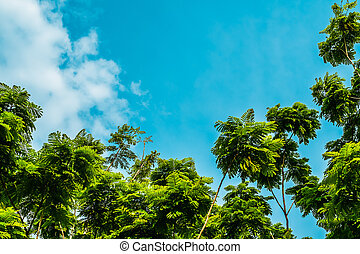 Tree against blue sky background