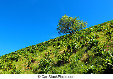 Tree against blue sky on a mountain