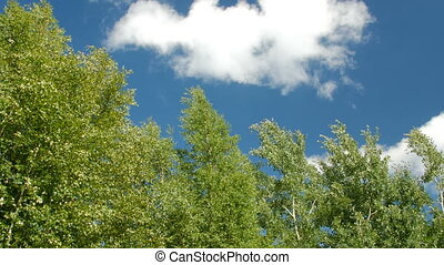 Tree against clear blue sky